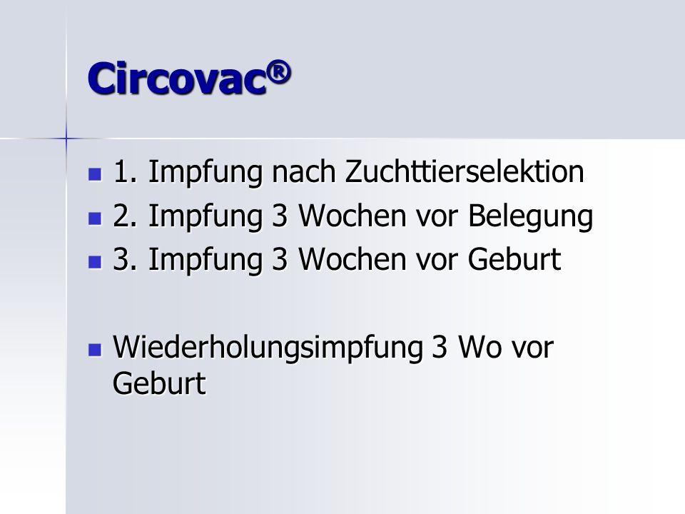 Circovac® 1. Impfung nach Zuchttierselektion
