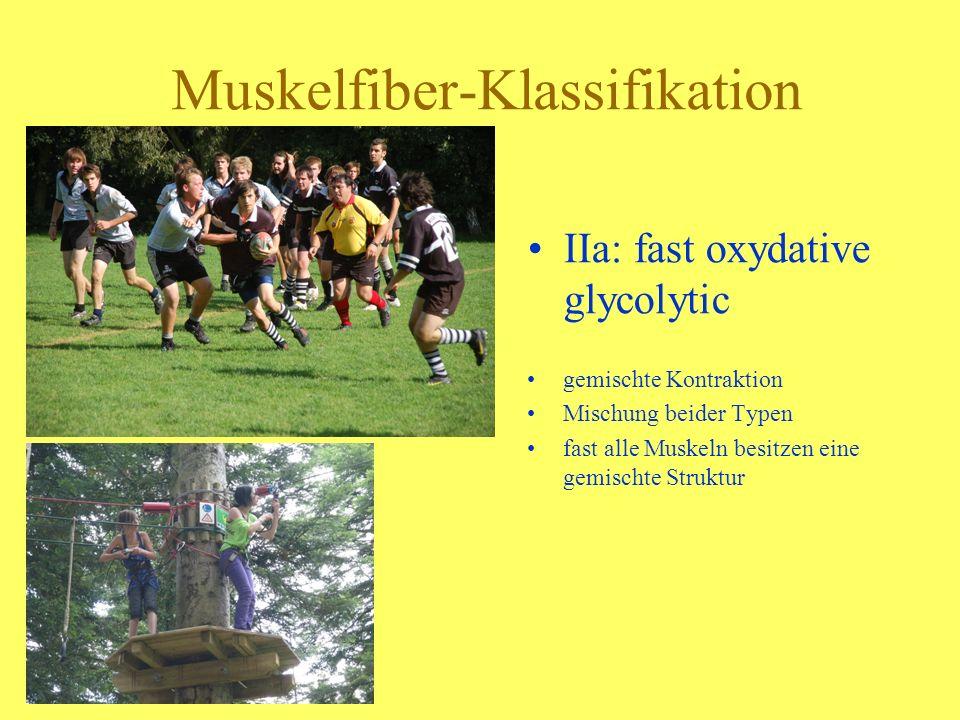 Muskelfiber-Klassifikation