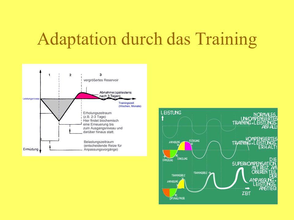 Adaptation durch das Training