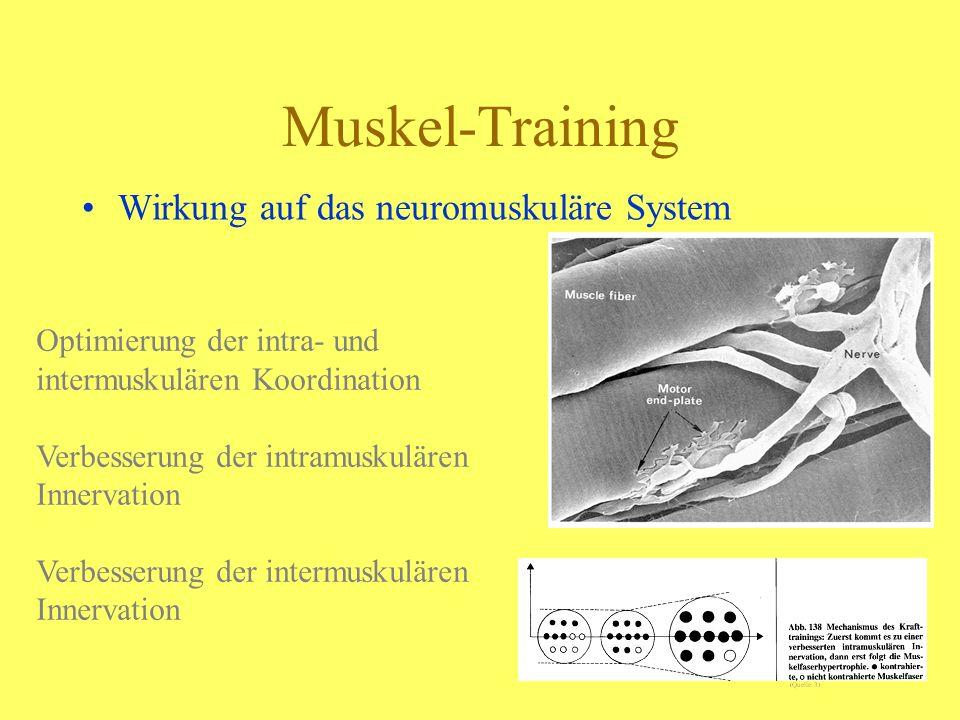 Muskel-Training Wirkung auf das neuromuskuläre System