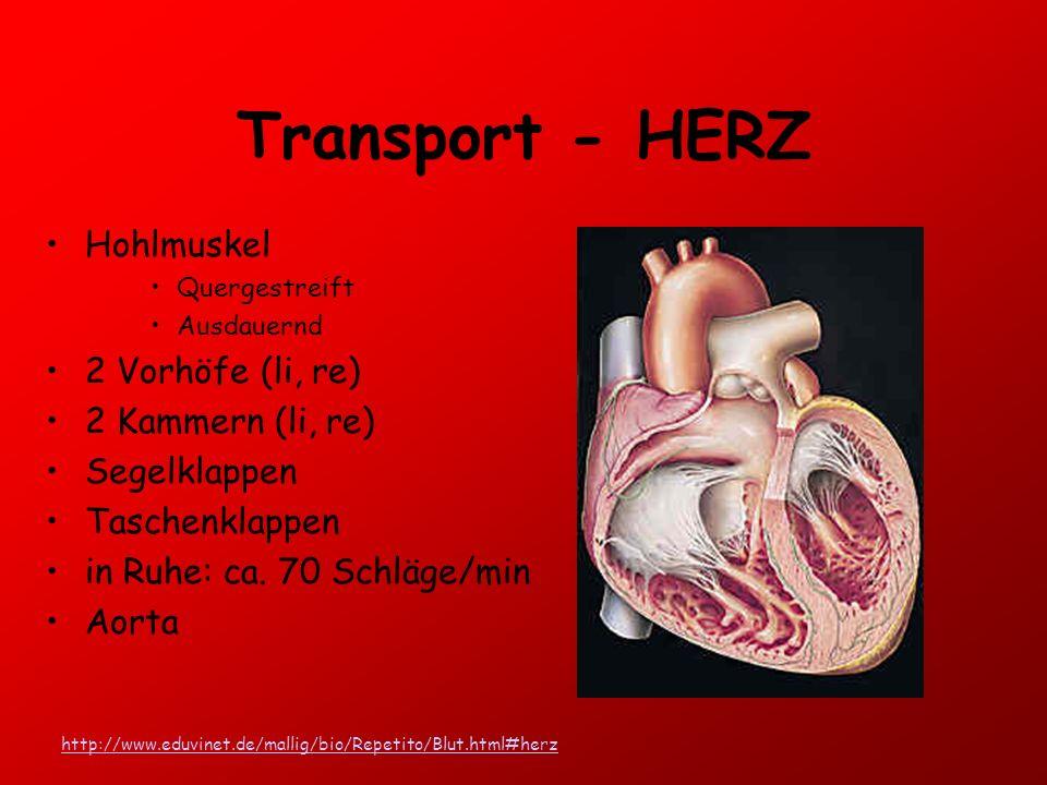 Transport - HERZ Hohlmuskel 2 Vorhöfe (li, re) 2 Kammern (li, re)