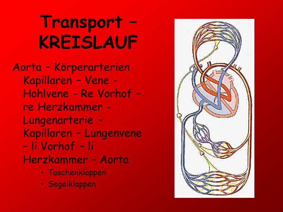 Transport – KREISLAUF