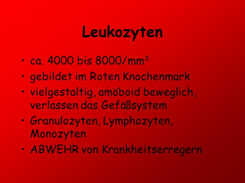 Leukozyten ca. 4000 bis 8000/mm3 gebildet im Roten Knochenmark