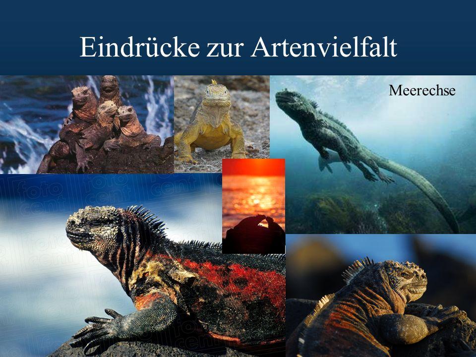 Eindrücke zur Artenvielfalt