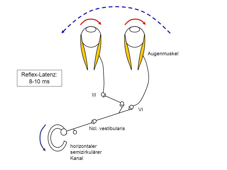 Reflex-Latenz: 8-10 ms Augenmuskel III VI Ncl. vestibularis