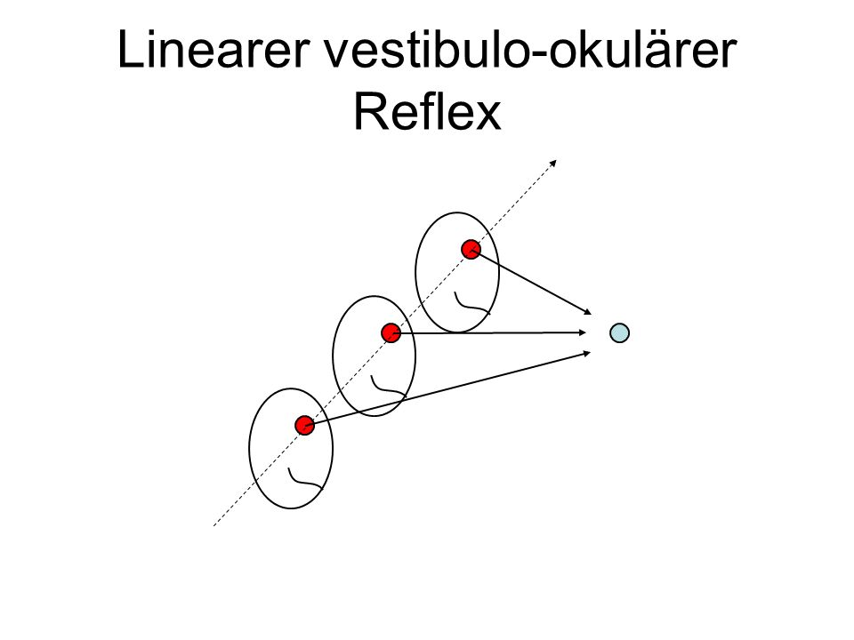 Linearer vestibulo-okulärer Reflex