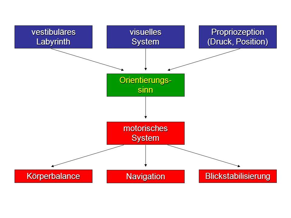 vestibuläres Labyrinth visuelles System