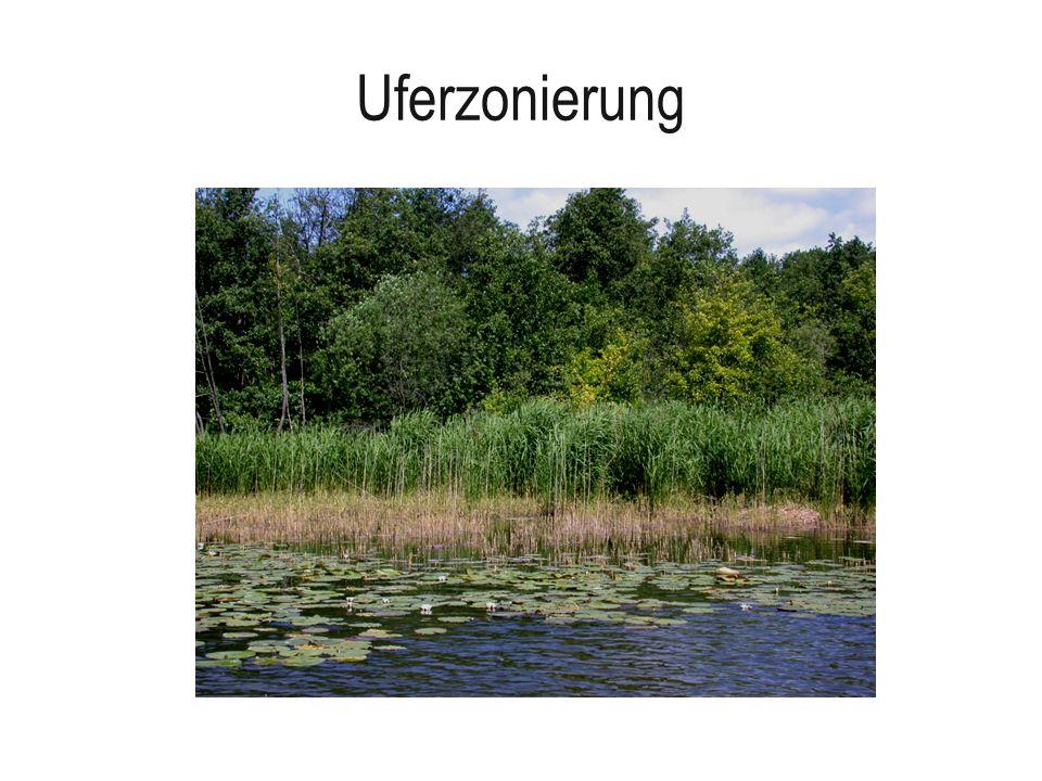 Uferzonierung