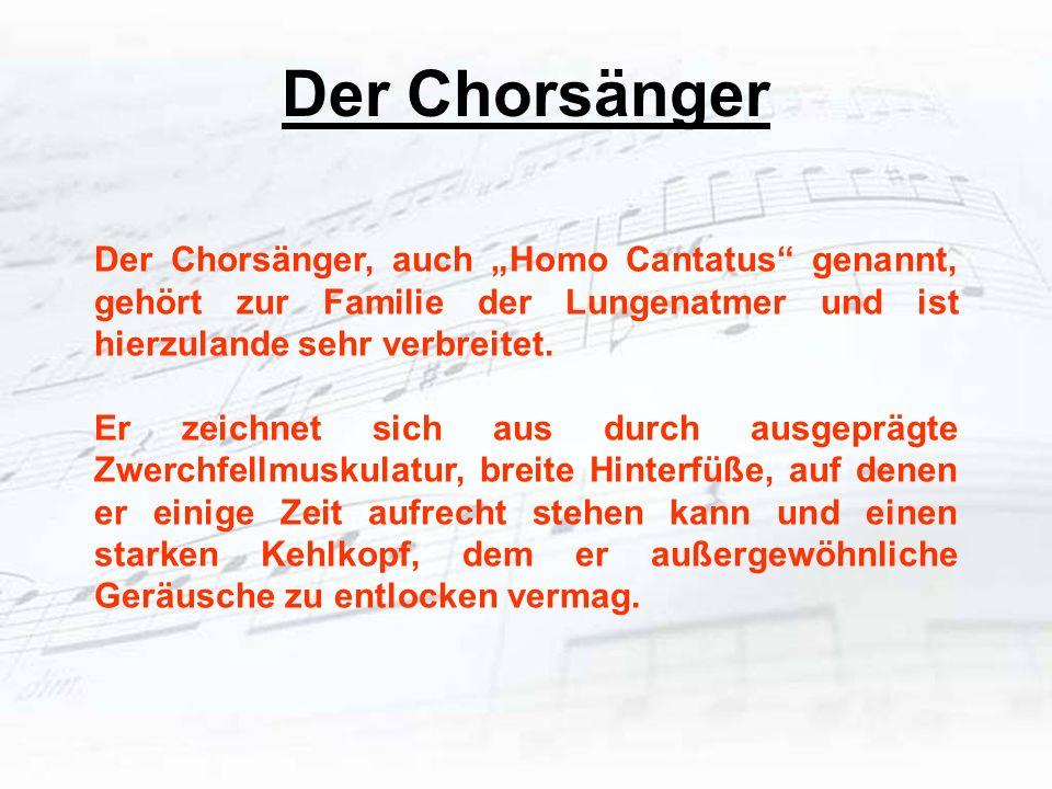 """Der Chorsänger Der Chorsänger, auch """"Homo Cantatus genannt, gehört zur Familie der Lungenatmer und ist hierzulande sehr verbreitet."""
