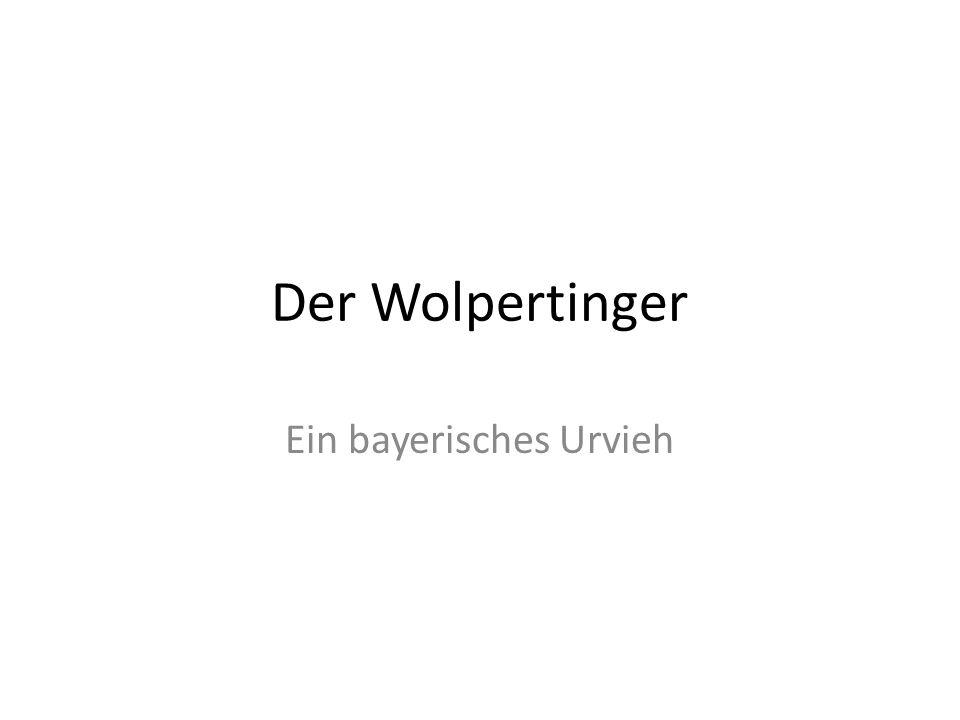 Ein bayerisches Urvieh