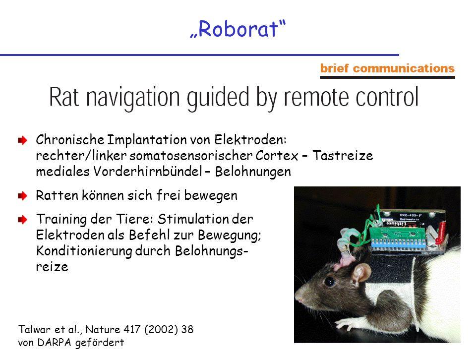"""""""Roborat Chronische Implantation von Elektroden: rechter/linker somatosensorischer Cortex – Tastreize mediales Vorderhirnbündel – Belohnungen."""