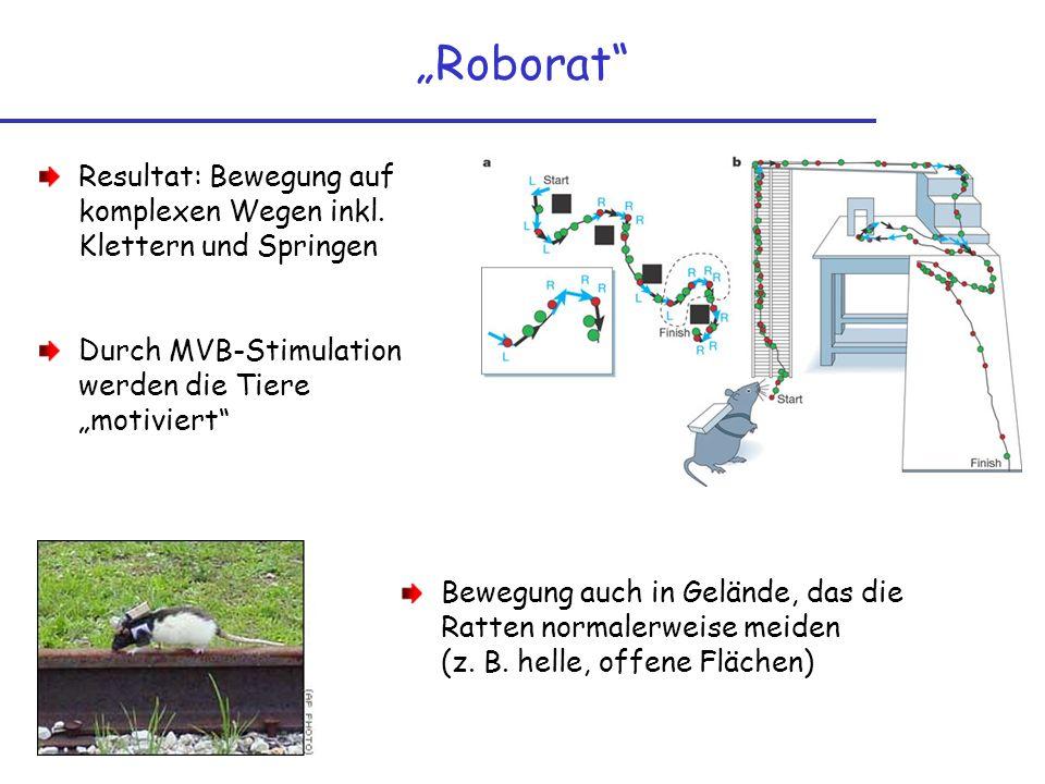 """""""Roborat Resultat: Bewegung auf komplexen Wegen inkl. Klettern und Springen. Durch MVB-Stimulation werden die Tiere """"motiviert"""
