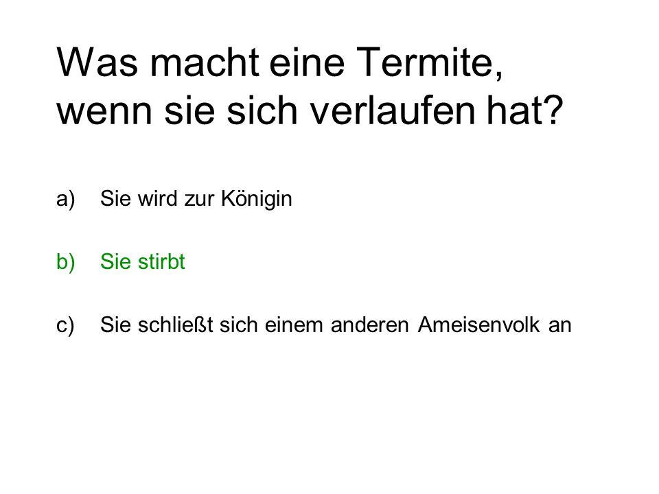 Was macht eine Termite, wenn sie sich verlaufen hat