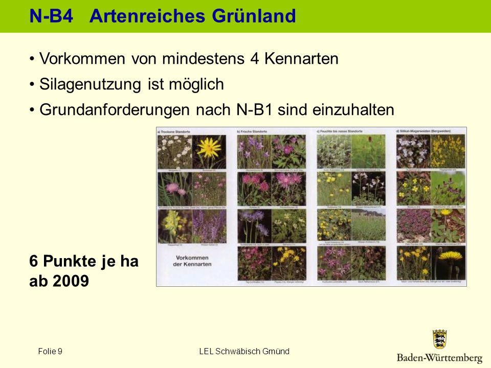 N-B4 Artenreiches Grünland