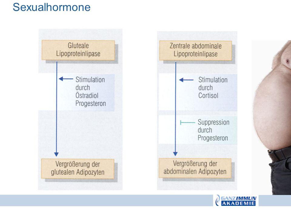 Sexualhormone Sexualhormone regulieren die Fettverteilung: