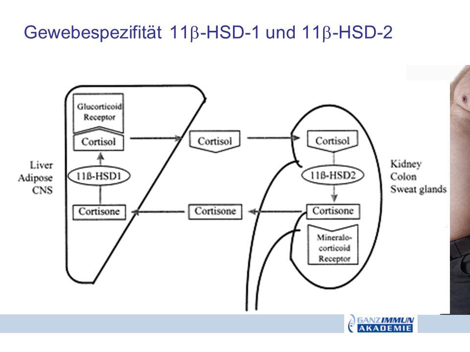 Gewebespezifität 11-HSD-1 und 11-HSD-2