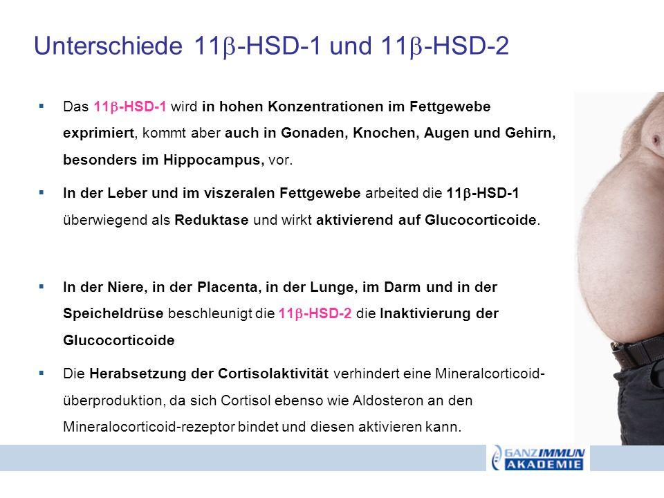 Unterschiede 11-HSD-1 und 11-HSD-2