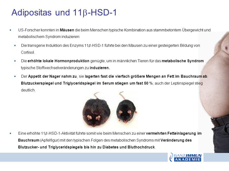 Adipositas und 11-HSD-1