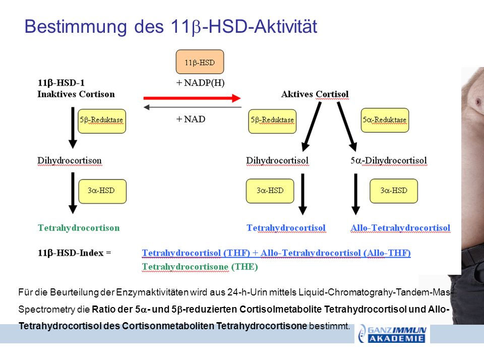Bestimmung des 11-HSD-Aktivität