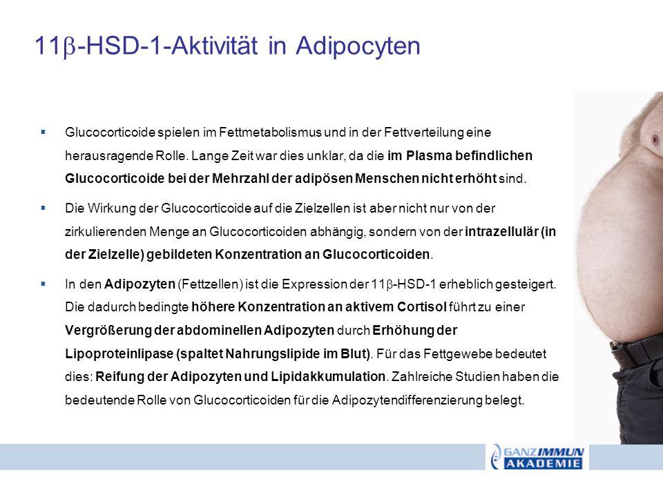 11-HSD-1-Aktivität in Adipocyten