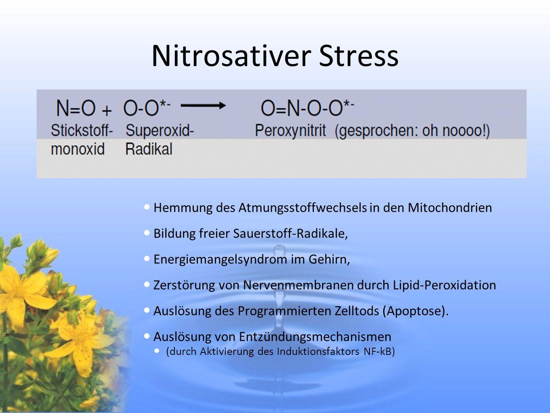 Nitrosativer Stress Hemmung des Atmungsstoffwechsels in den Mitochondrien. Bildung freier Sauerstoff-Radikale,