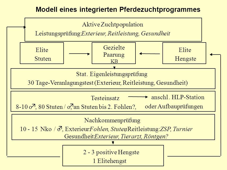 Modell eines integrierten Pferdezuchtprogrammes
