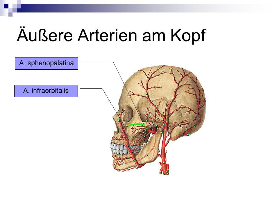 Äußere Arterien am Kopf