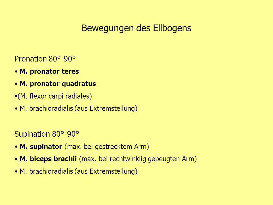 Bewegungen des Ellbogens