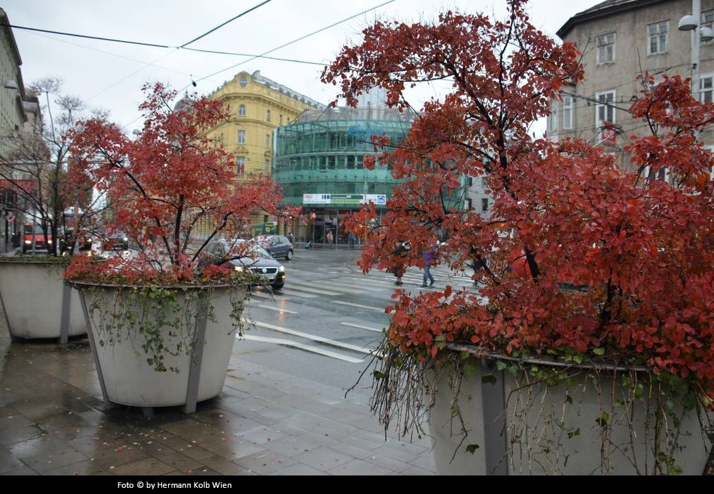 Foto © by Hermann Kolb Wien