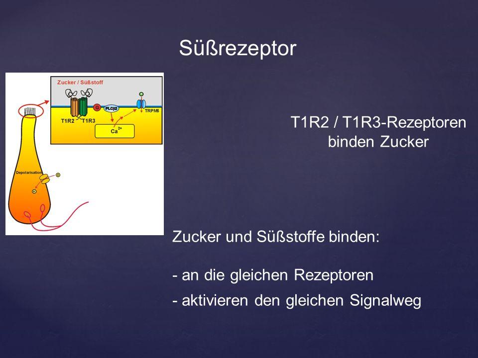 Süßrezeptor T1R2 / T1R3-Rezeptoren binden Zucker