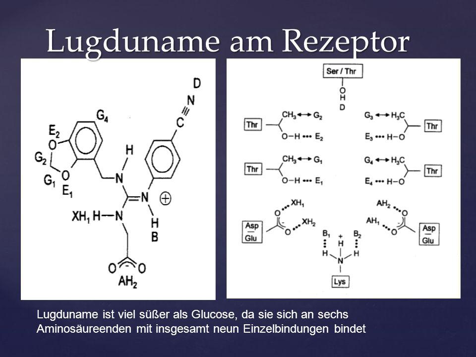 Lugduname am Rezeptor Lugduname ist viel süßer als Glucose, da sie sich an sechs Aminosäureenden mit insgesamt neun Einzelbindungen bindet.