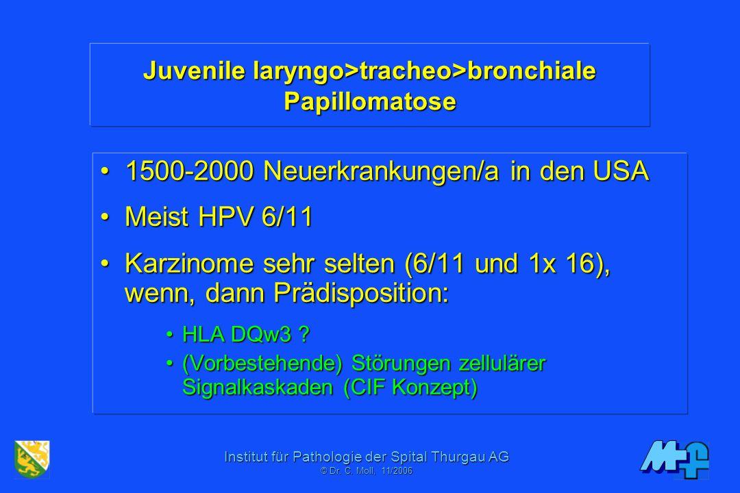 Juvenile laryngo>tracheo>bronchiale Papillomatose