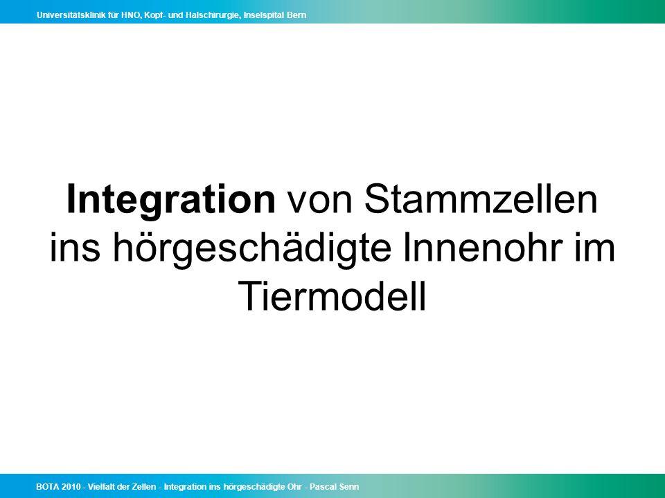 Integration von Stammzellen ins hörgeschädigte Innenohr im Tiermodell