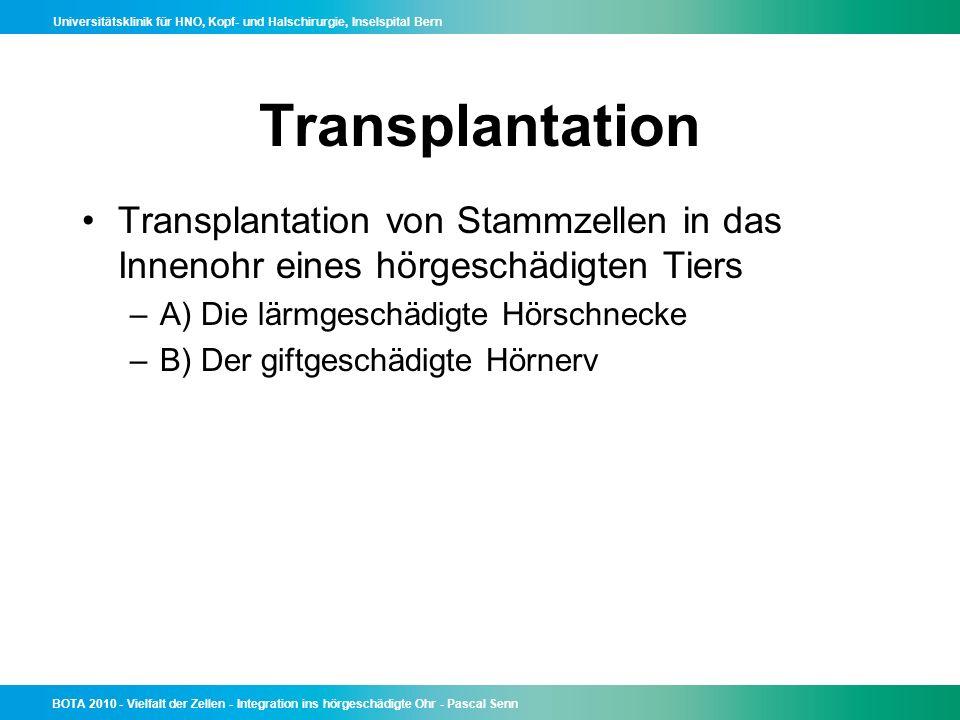 Transplantation Transplantation von Stammzellen in das Innenohr eines hörgeschädigten Tiers. A) Die lärmgeschädigte Hörschnecke.