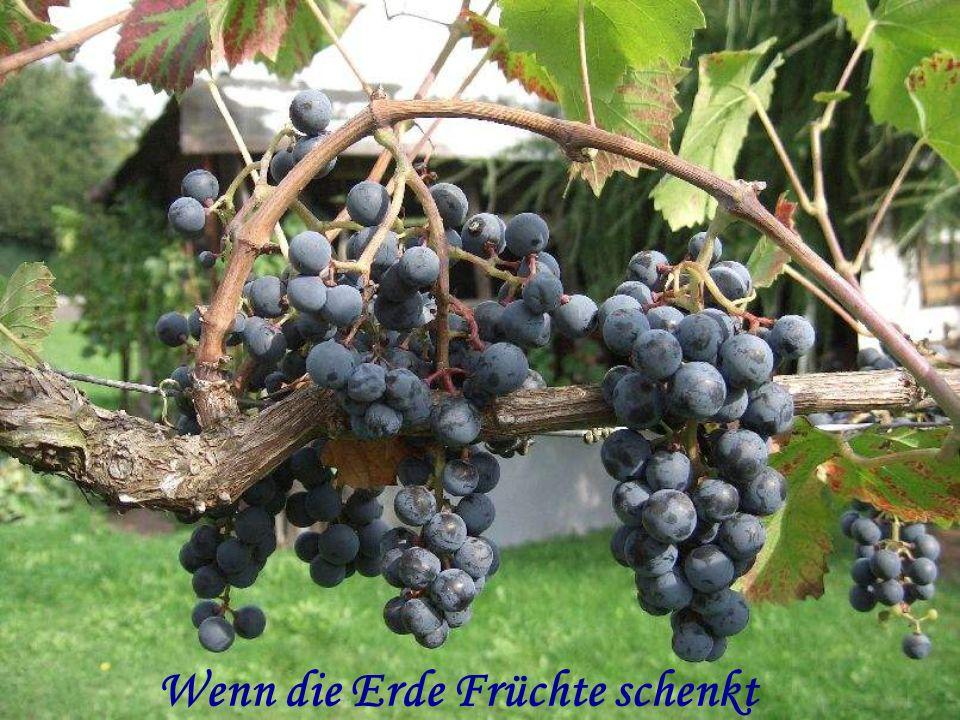Wenn die Erde Früchte schenkt