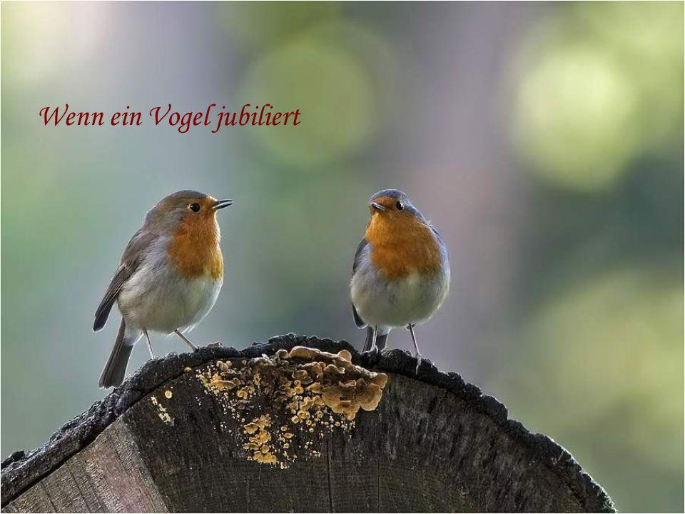 Wenn ein Vogel jubiliert
