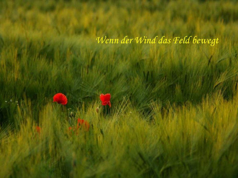 Wenn der Wind das Feld bewegt