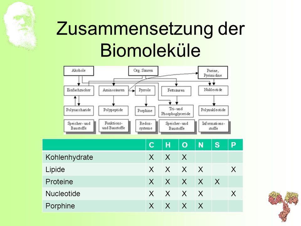 Zusammensetzung der Biomoleküle