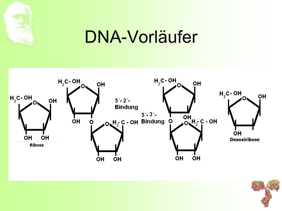 DNA-Vorläufer