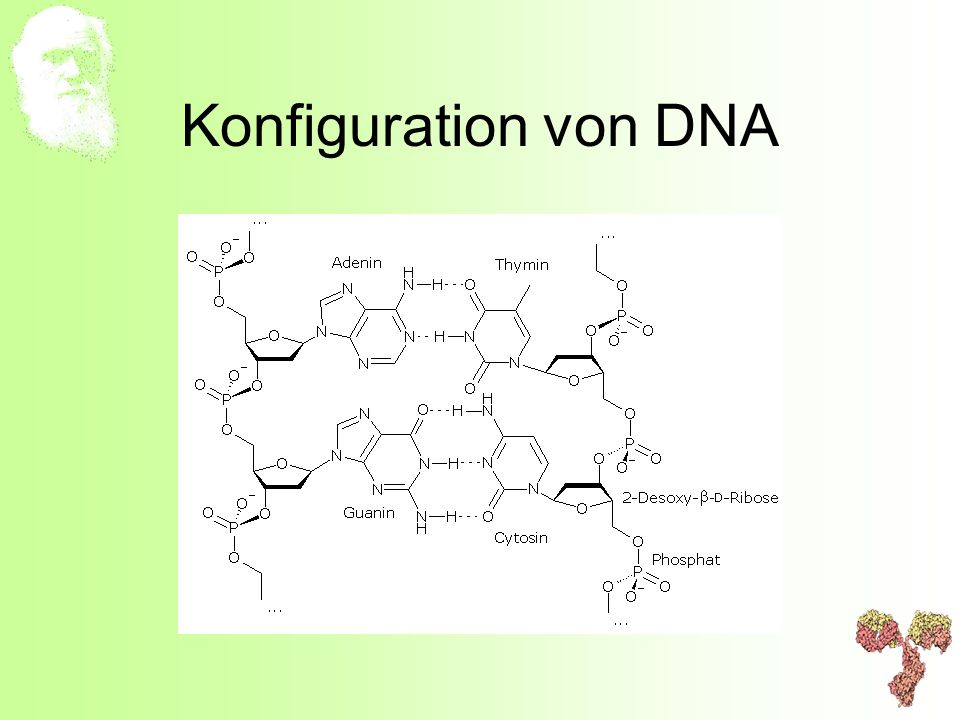 Konfiguration von DNA
