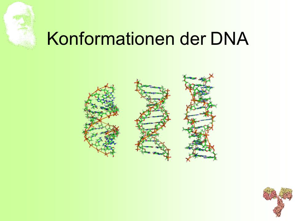 Konformationen der DNA