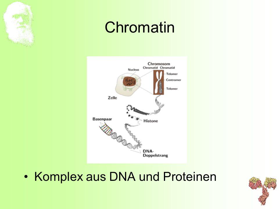 Chromatin Komplex aus DNA und Proteinen