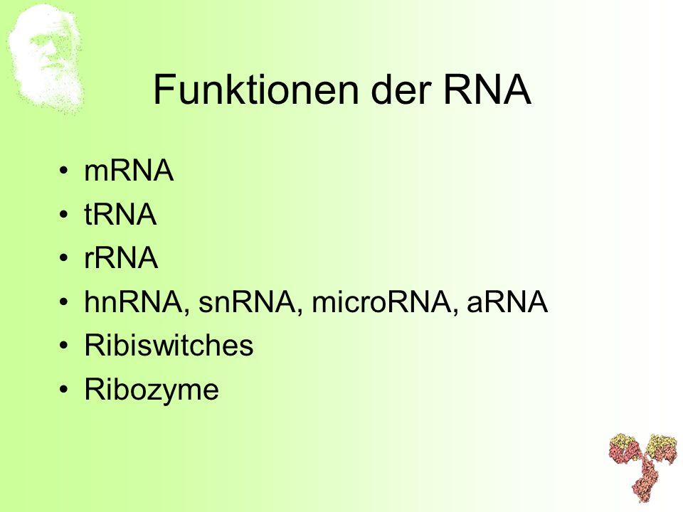 Funktionen der RNA mRNA tRNA rRNA hnRNA, snRNA, microRNA, aRNA