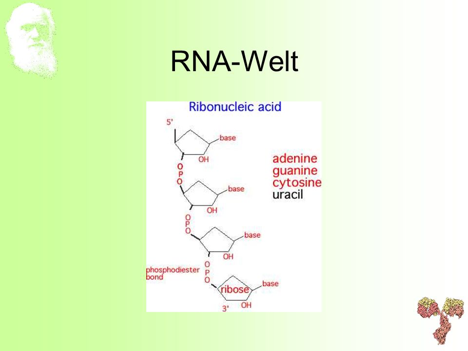 RNA-Welt
