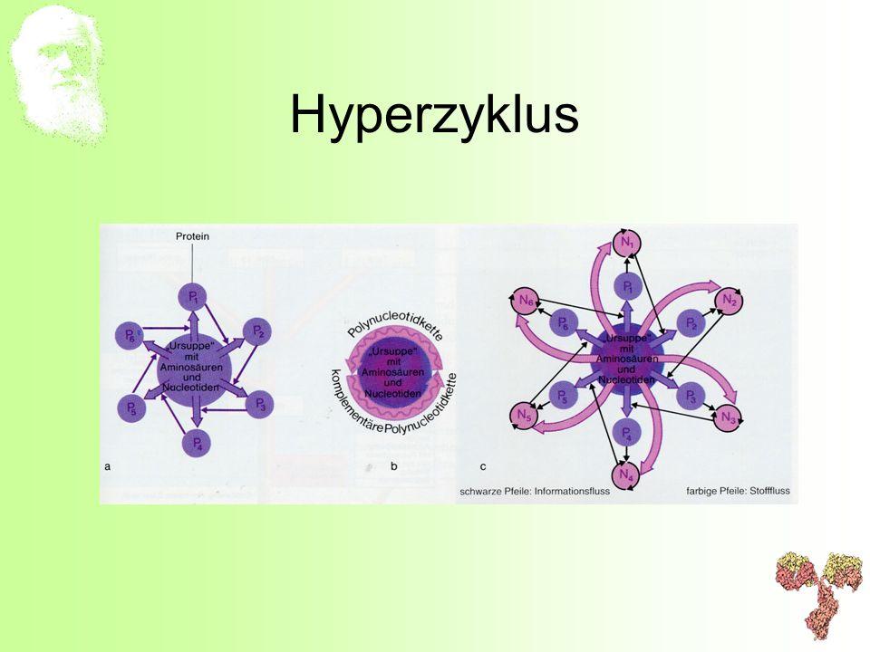 Hyperzyklus