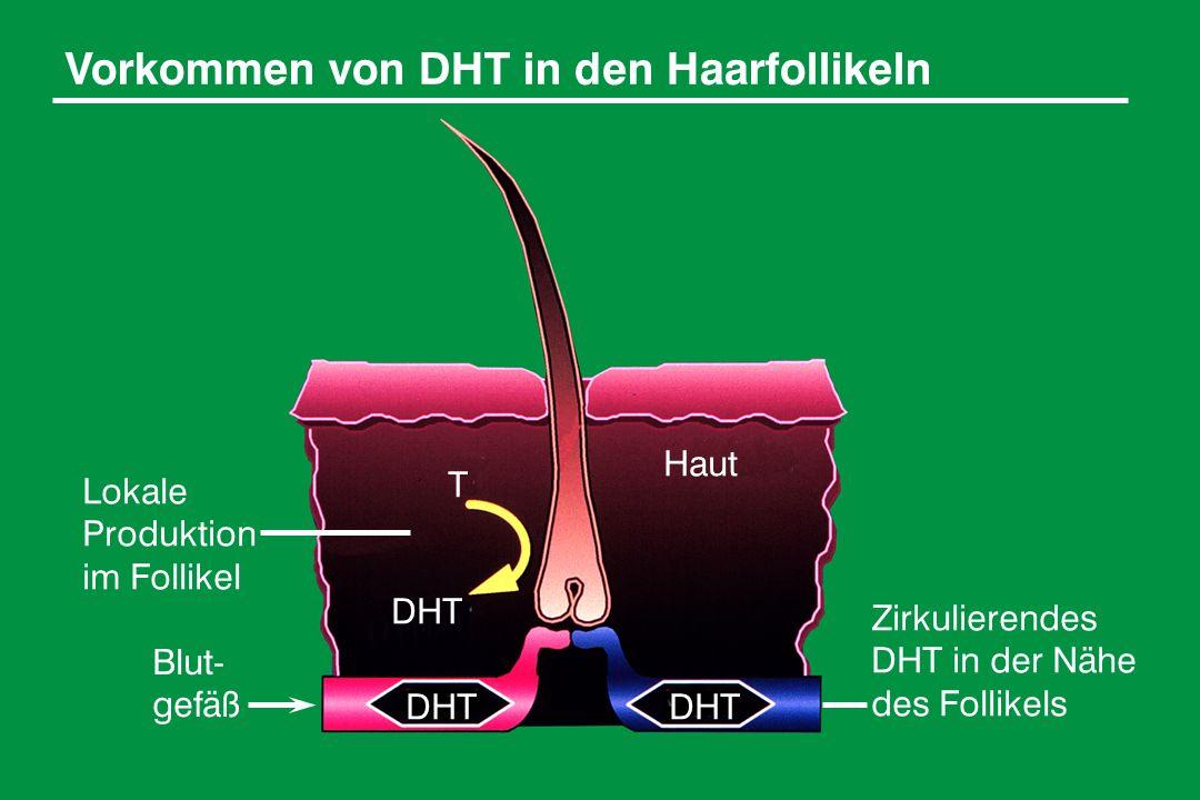 Vorkommen von DHT in den Haarfollikeln