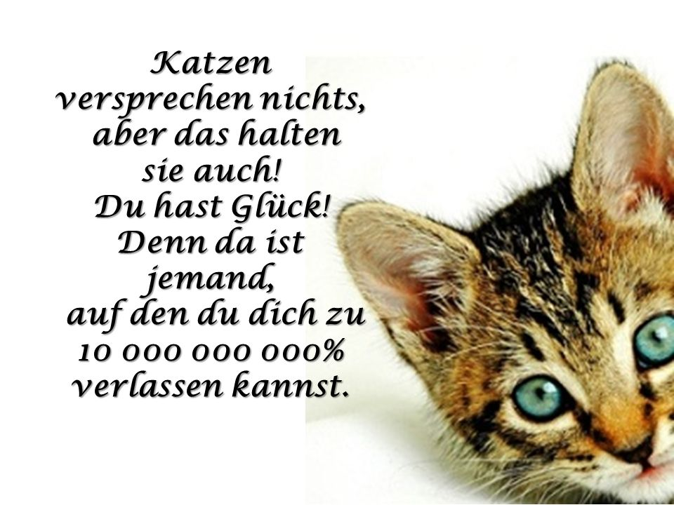 Katzen versprechen nichts,