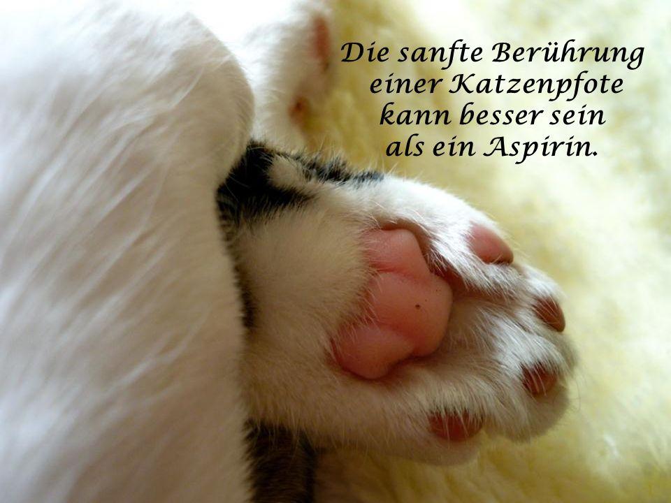Die sanfte Berührung einer Katzenpfote kann besser sein als ein Aspirin.