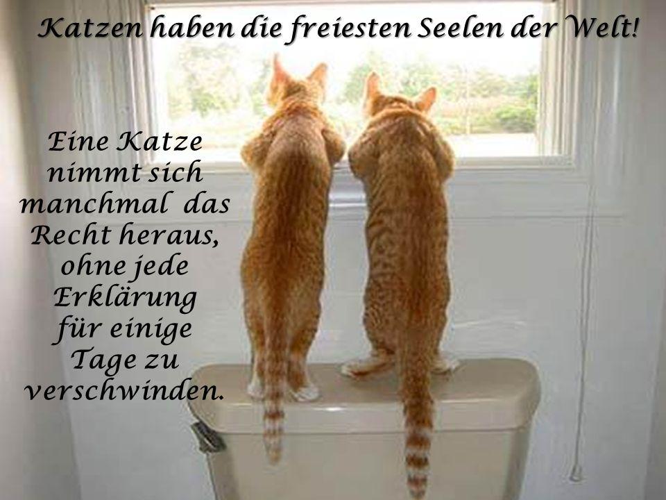 Katzen haben die freiesten Seelen der Welt!