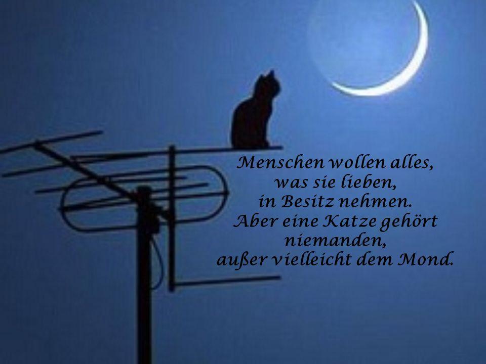 Aber eine Katze gehört niemanden, außer vielleicht dem Mond.